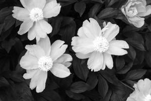 Marciasflowers