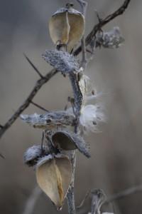 Milkweedpatterns