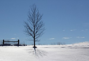 Windhover_tree_snow