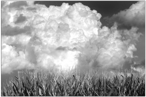 Platte County 127--Corn and Thunderheads